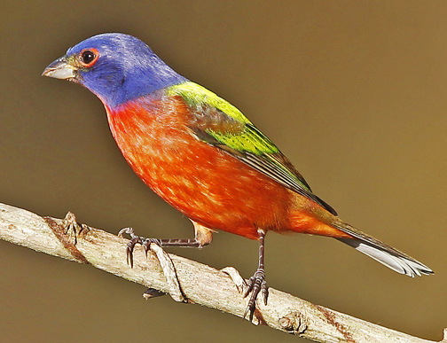 The 10 most beautiful birds