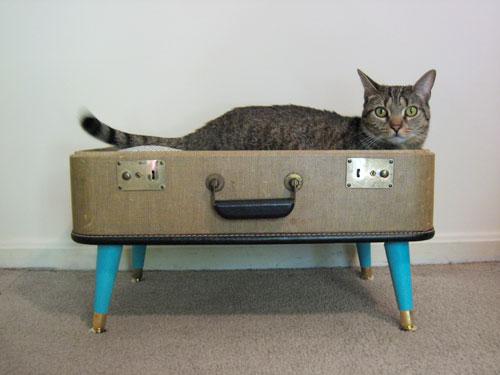 Cómo hacer casas para gatos en Recicla Inventa