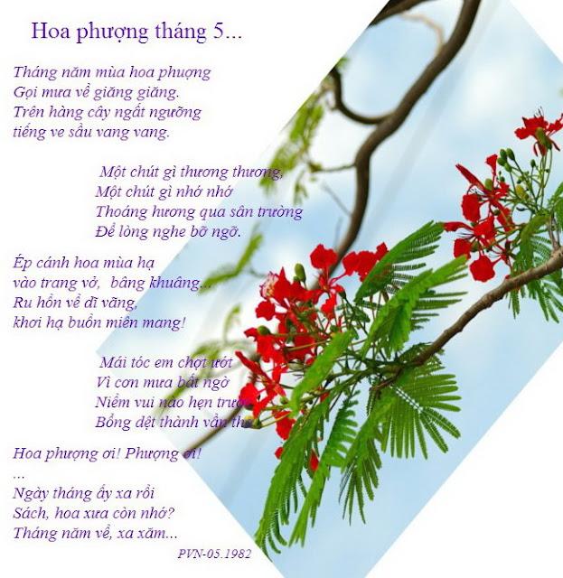 Hoa phượng tháng năm