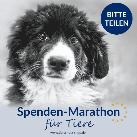 Spendenmarathon vom 16.11.-22.12.2017