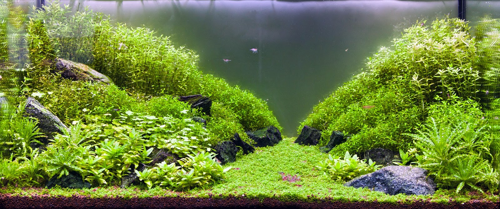 Aquascaping spain el pradillo by ana sanchez gonzalez - Aquascape espana ...