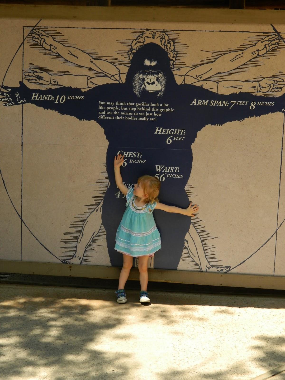 Gorilla Size Comparison