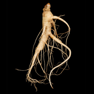 Caution in use Panax ginseng