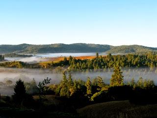 Sonoma, Napa Valley, fog, chardonnay