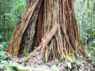 http://tipspetani.blogspot.com/2014/12/tanaman-unik-yang-ada-di-indonesia.html