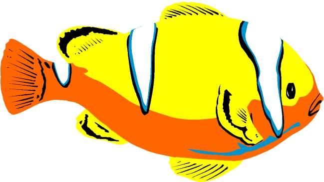 Clipart Kartun Ikan