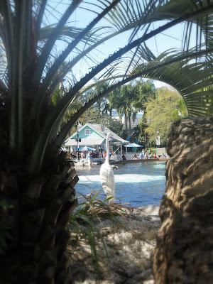 Egret at SeaWorld Orlando, FL.