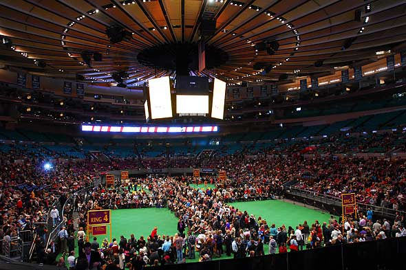 Unique To NYC Westminster Dog Show at Madison Square Garden 1 of 2