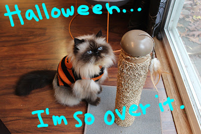 Halloween-cat-costume_02