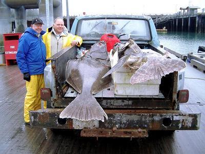 monster fish alaska halibut yuthink