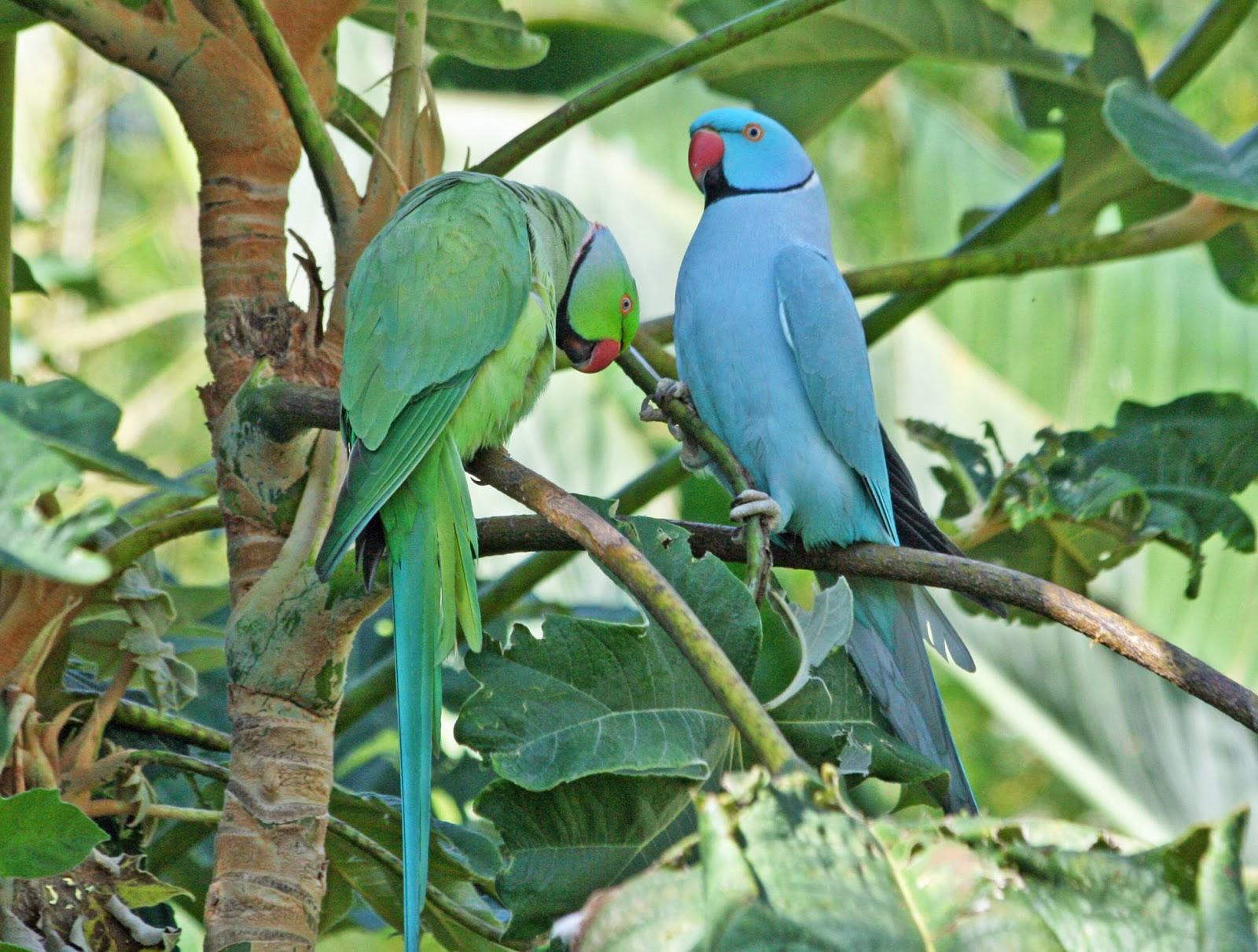 Real Parrot 10 JENIS BURUNG PALING PINTAR BERBICARA DI DUNIA