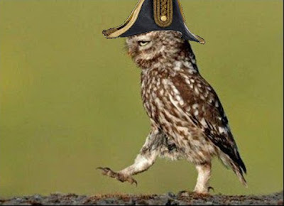 Captain owl in charge