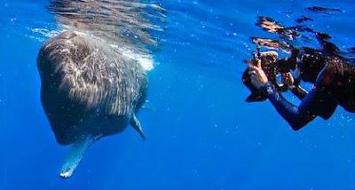 Δύτες έπεσαν σε 'τυφώνα από κόπρανα' στην προσπάθεια τους να φωτογραφίσουν φάλαινα