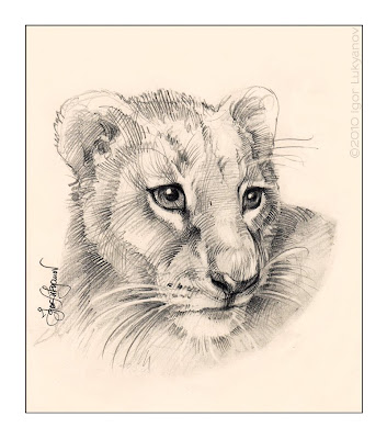 cute lion cub drawing (baby lion's face pic)