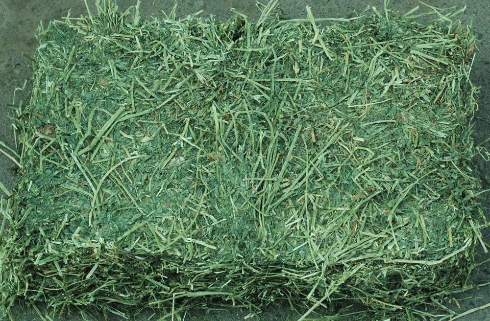 is alfalfa hay good for horses pets world