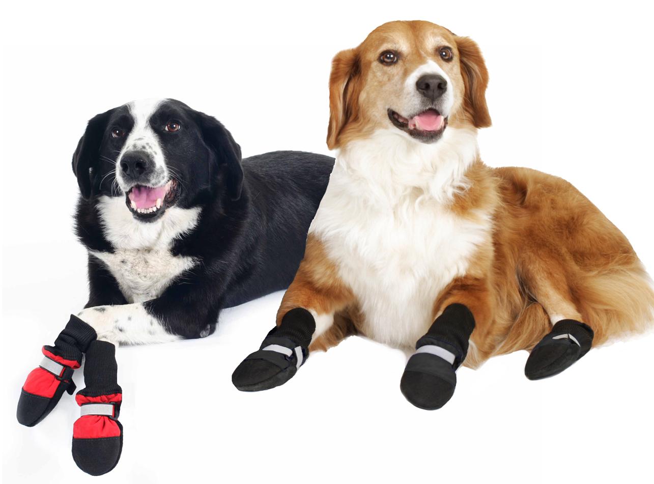 dog+booties.jpg