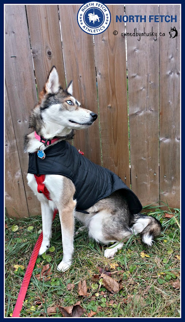 Winter jackets for dogs