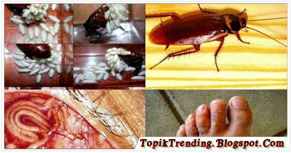 Bahaya Membunuh Kecoa