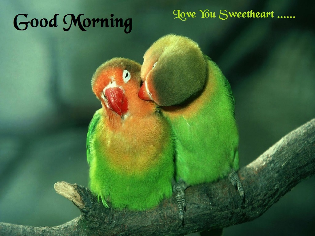Love Good Morning Kiss Wallpaper : Good Morning Kissing Photo, Wallpaper Free Download ...