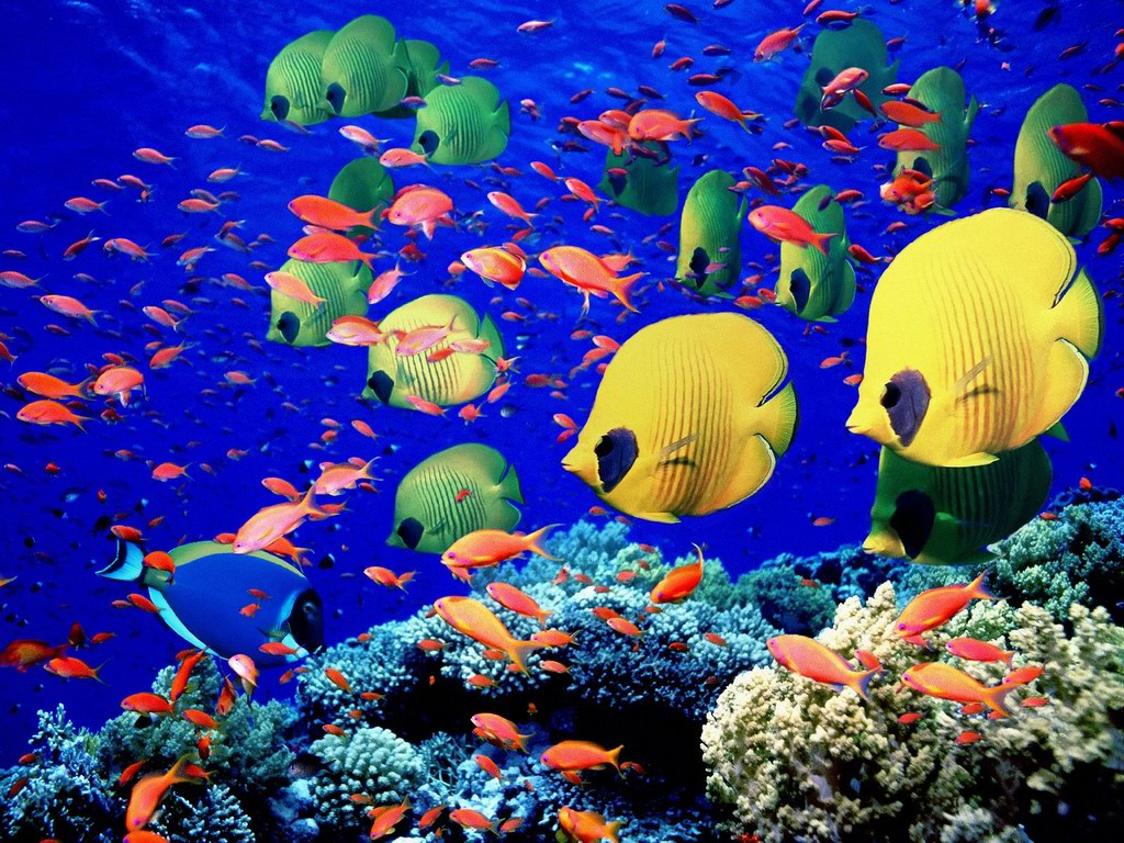 World Visits Tropical Fish Wonderful Natural Color Design