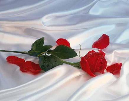rosas de amor. con rosas ~rosas de tela o