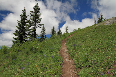 Goat Mountain Trail in the Open