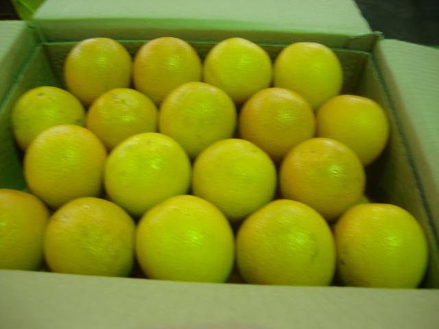 orange_suppliers