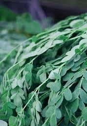 drumstic leaves