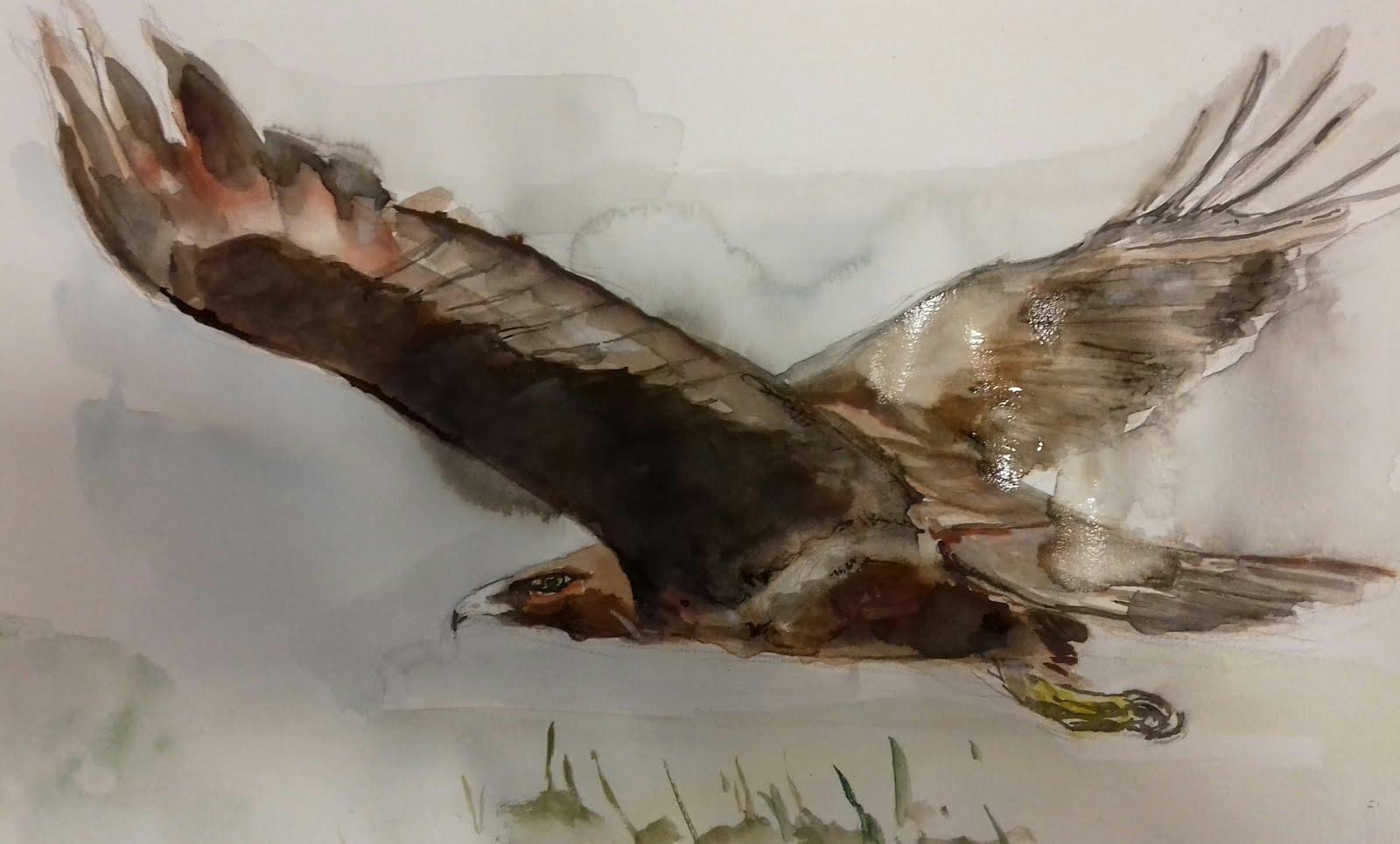 Aguila de Blus 3
