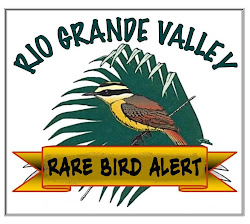 Rio Grande Valley Rare Bird Alert