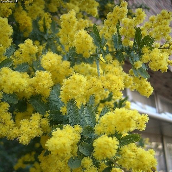 The organic gardener list of autumn flowers list of autumn flowers mightylinksfo