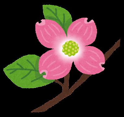 ハナミズキのイラスト(花)