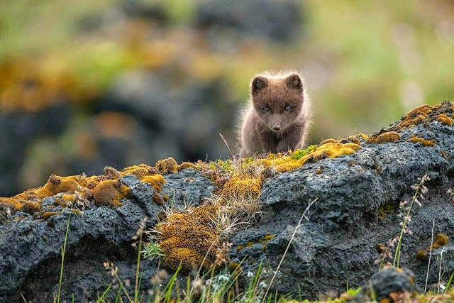 7. These 11 Photos Will Make You Fall In Love With Foxes
