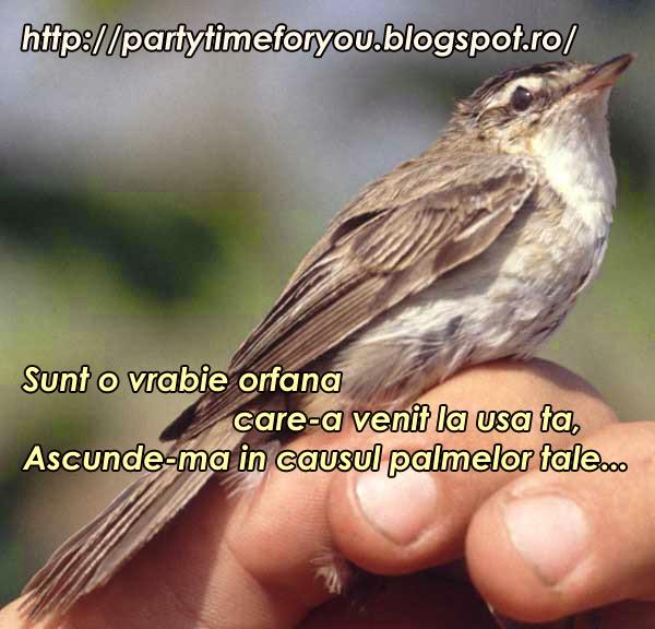 Sunt o vrabie orfana care -a venit la usa ta, Ascunde-ma in causul palmelor tale...