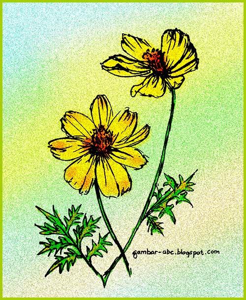 gambar bunga kenikir