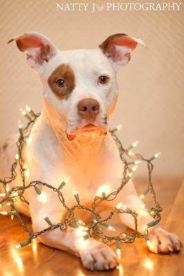 Piglet Tangled in Christmas lights.