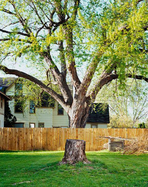 Ilusão de ótica com árvore