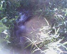 Assacinato ( corpo encontrado em estado de decomposição  foi enconctrado na cidade de Catu