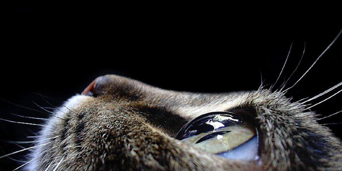 Cat Eye 300+ Muhteşem HD Twitter Kapak Fotoğrafları