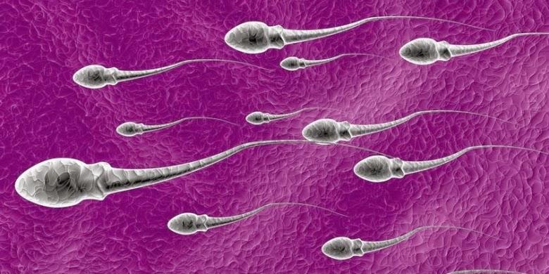Memperkuat Sperma dengan Wortel
