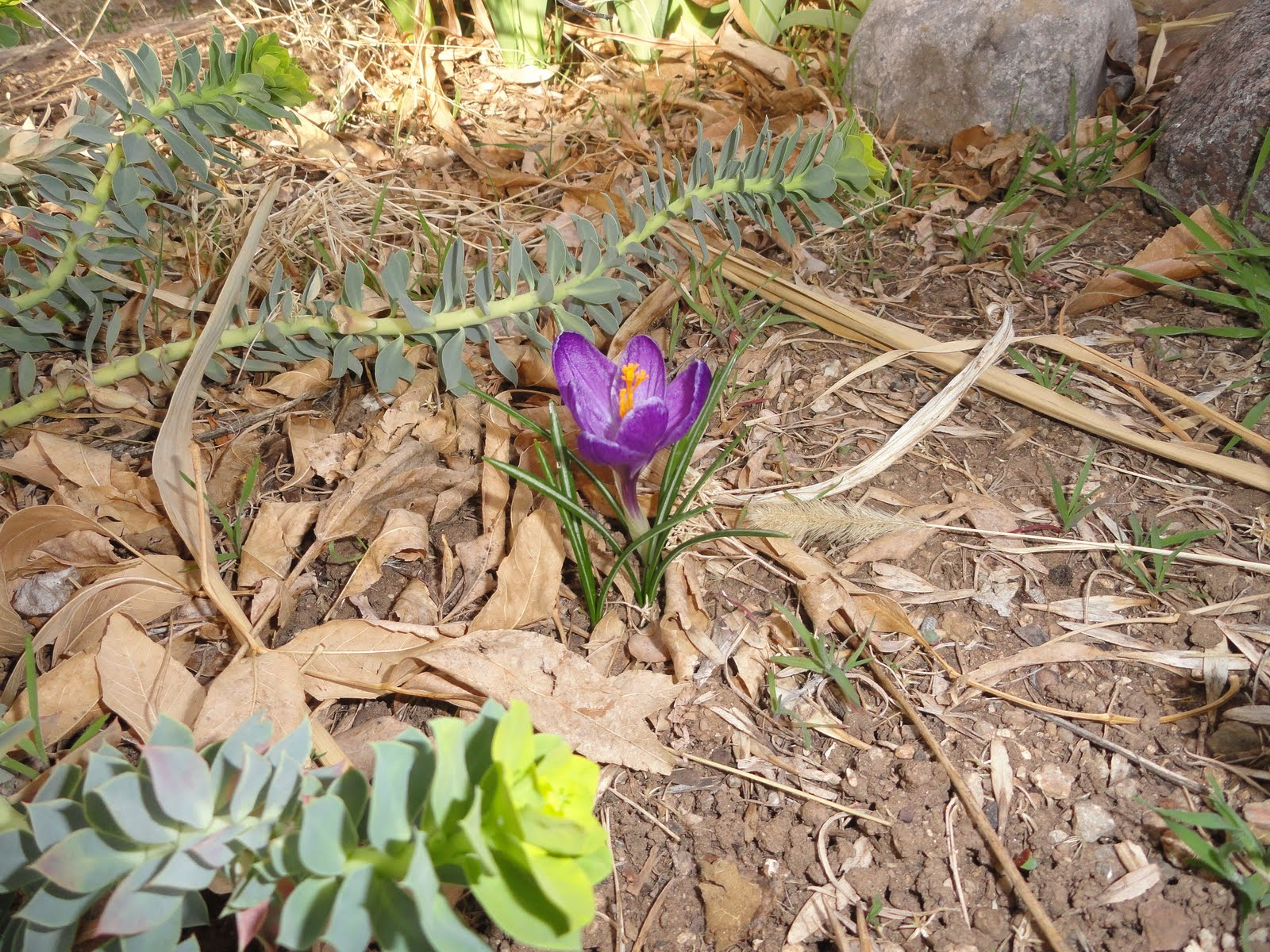 Sandra Dodd First Flower Of Spring