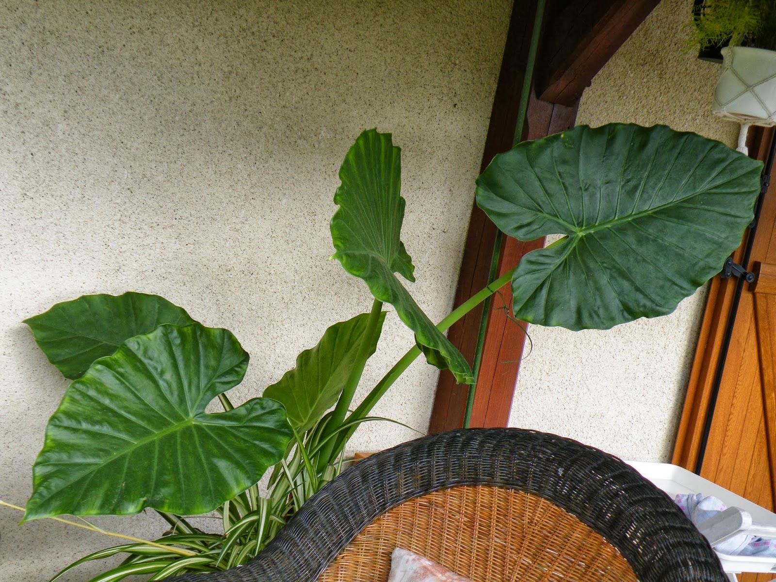 Du four au jardin et mes dix doigts plante verte for Plante au jardin