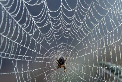 spider-and-web-570x383.jpg