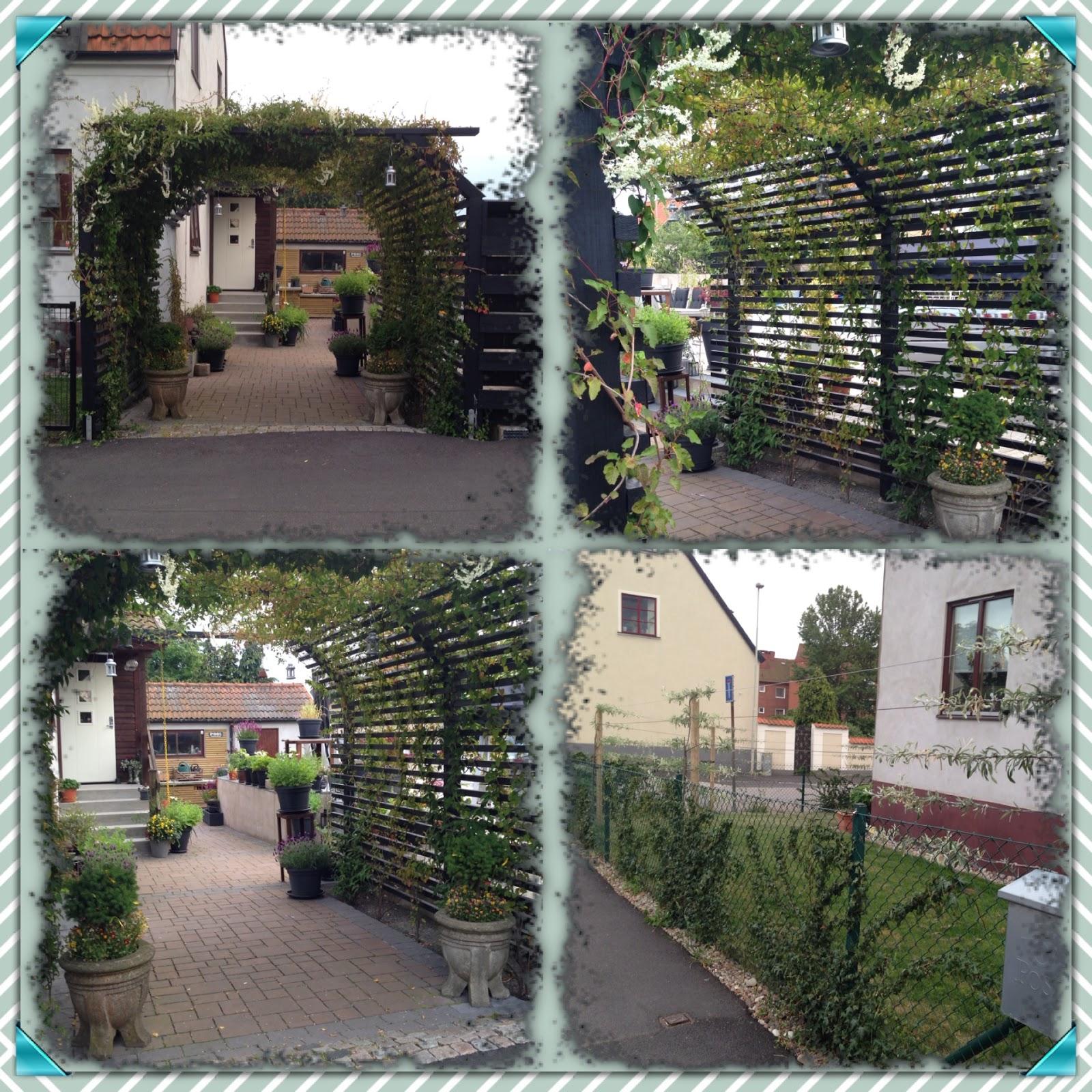 Lottas vrå tipsar och funderar: Lite överblick i trädgården - det ...