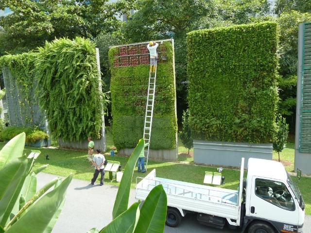 Jardines verticales muros verdes paredes vegetales - Como hacer un muro verde ...