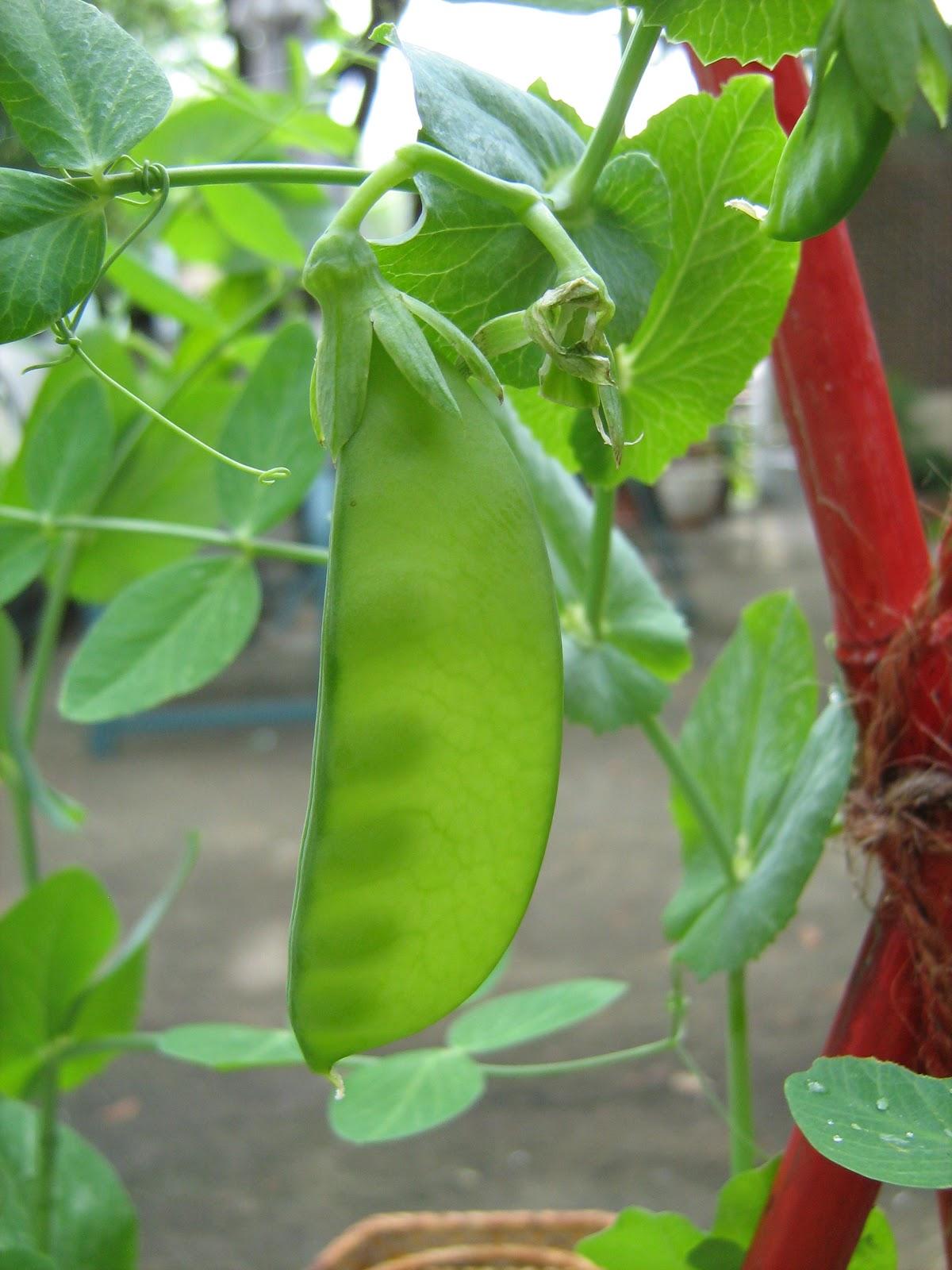 O acheter ses semences sur internet for Acheter plantes sur internet