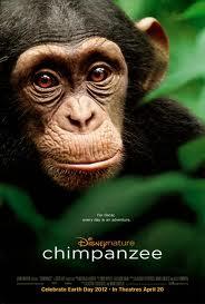 Tinh Tinh Chimpanzee - Chimpanzee