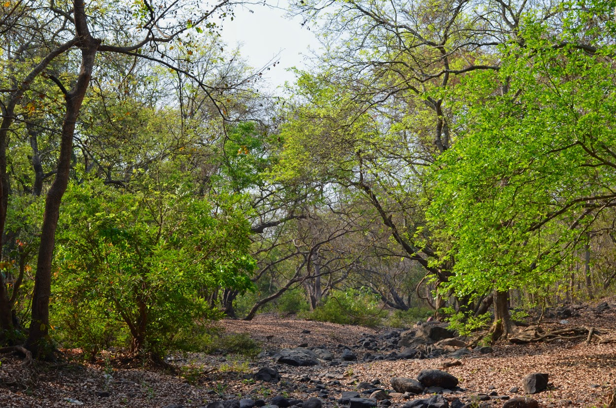 Dry river Borivali National Park