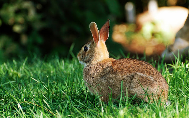 Beautiful And Cute Rabbit Wallpapers In Hd Unique Wallpaper