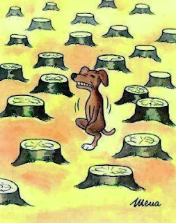 Deforestation dog desperate for a pee